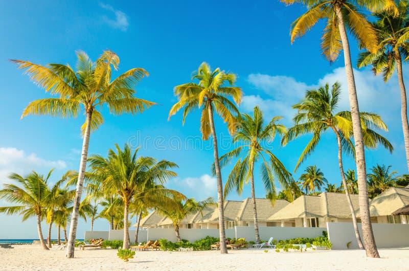 Praia exótica bonita com palmas altas imagens de stock royalty free