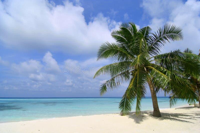 Praia exótica em Maldives imagem de stock royalty free