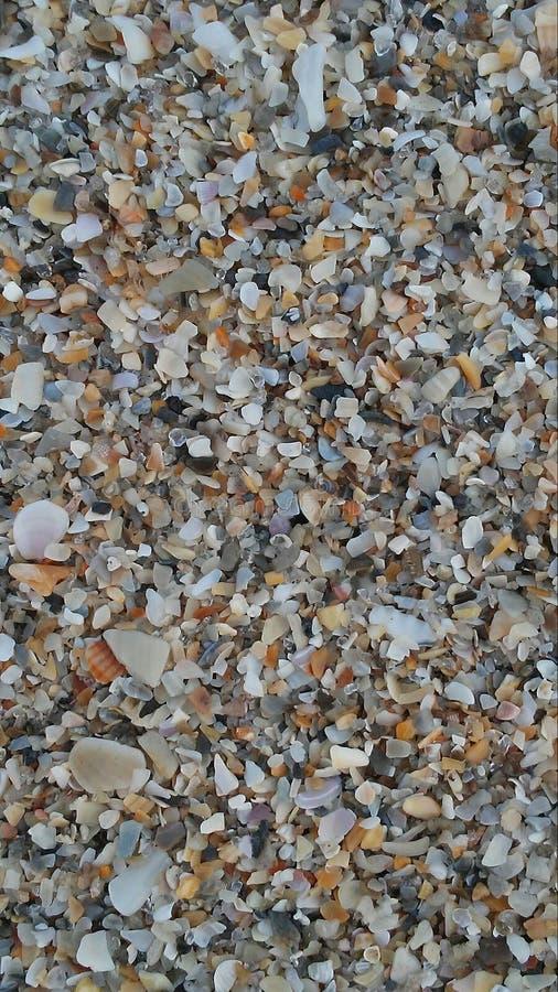 Praia feita dos shell em vez da areia imagem de stock
