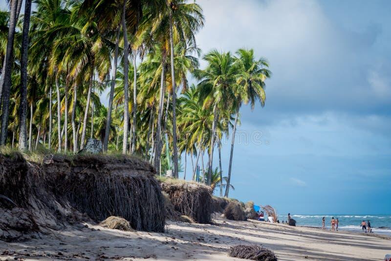 Praia gör Paiva, Pernambuco - Brasilien arkivfoto