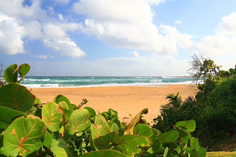 Praia isolado bonita em Isabela, Puerto Rico imagem de stock