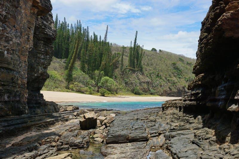 A praia litoral de Nova Caledônia da paisagem balança pinhos fotografia de stock royalty free