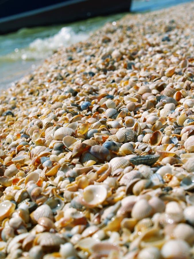 Praia molhada dos escudos fotografia de stock