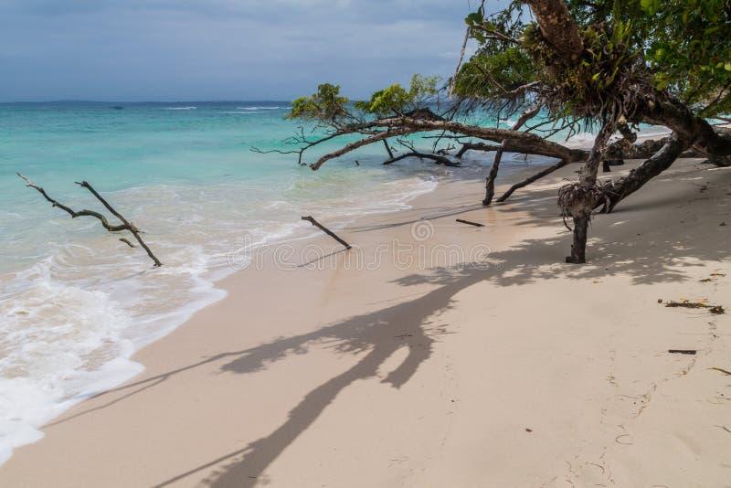 Praia na ilha de Isla Zapatilla, parte do arquipélago de Toro do del de Bocas, Pana imagem de stock royalty free