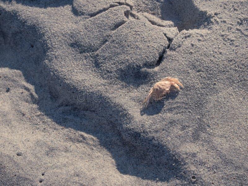 Praia nacional da guarda costeira do litoral de Cape Cod fotos de stock royalty free