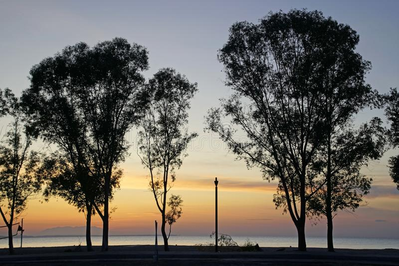 Praia no pôr do sol Céu colorido e silhuetas de pinheiros e eucaliptos Coastline Noite de setembro imagens de stock