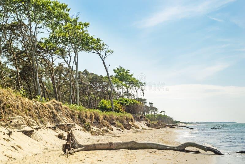 Praia ocidental na península Darss em Mecklenburg- Pomerania ocidental, Alemanha imagens de stock royalty free