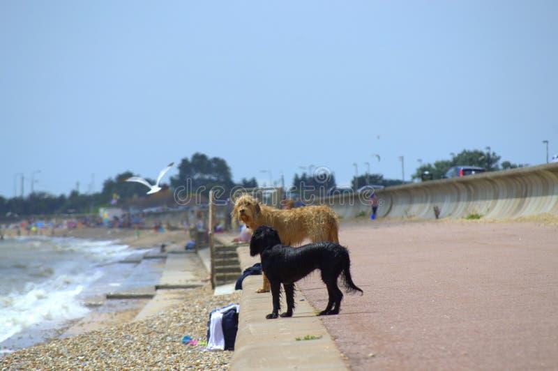 A praia persegue Kent United Kingdom fotos de stock