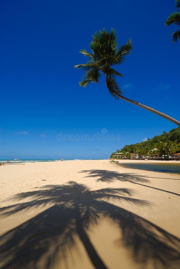 praia pipa Бразилии da пляжа красивейший стоковая фотография rf
