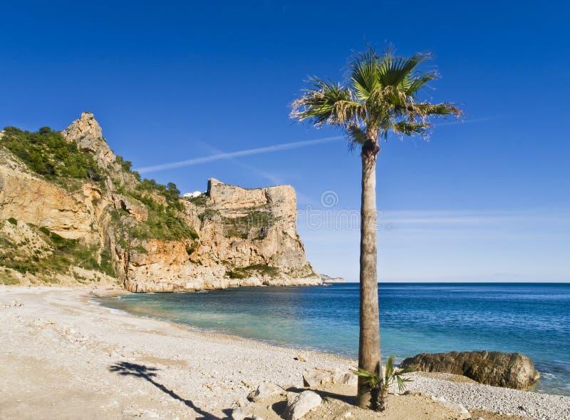 Praia só com uma palmeira fotografia de stock