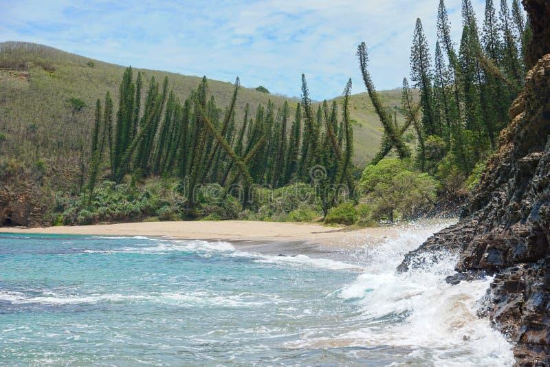 Praia selvagem de Nova Caledônia com pinheiros imagens de stock