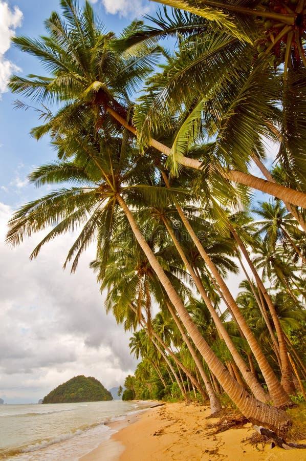 Praia selvagem exótica imagem de stock royalty free