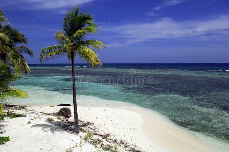 Praia tropical Belize foto de stock