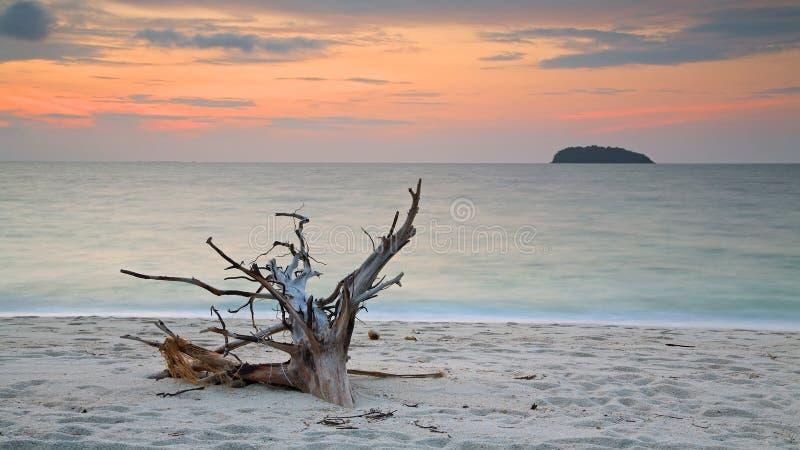 Praia tropical bonita com madeira da tração antes do nascer do sol imagem de stock
