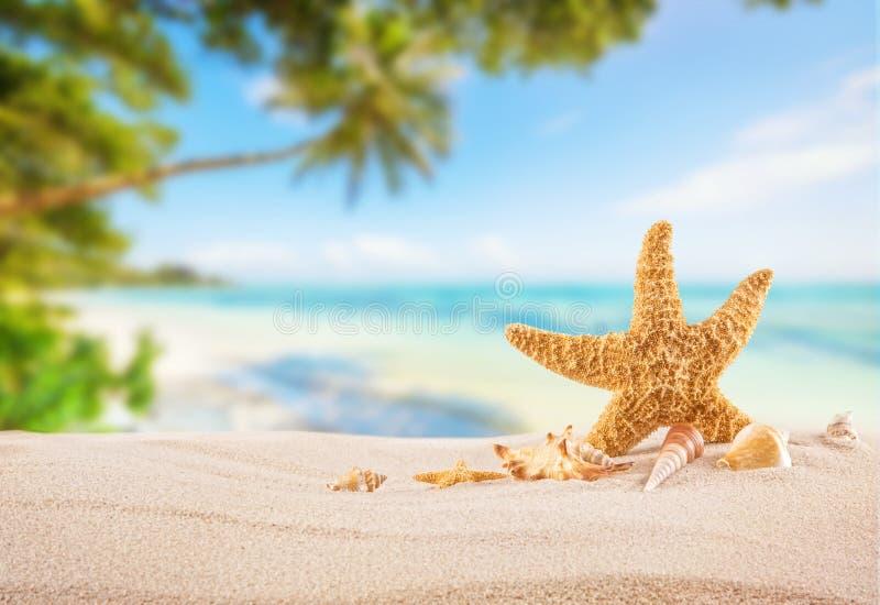 Praia tropical com a estrela de mar na areia, fundo das férias de verão imagem de stock royalty free