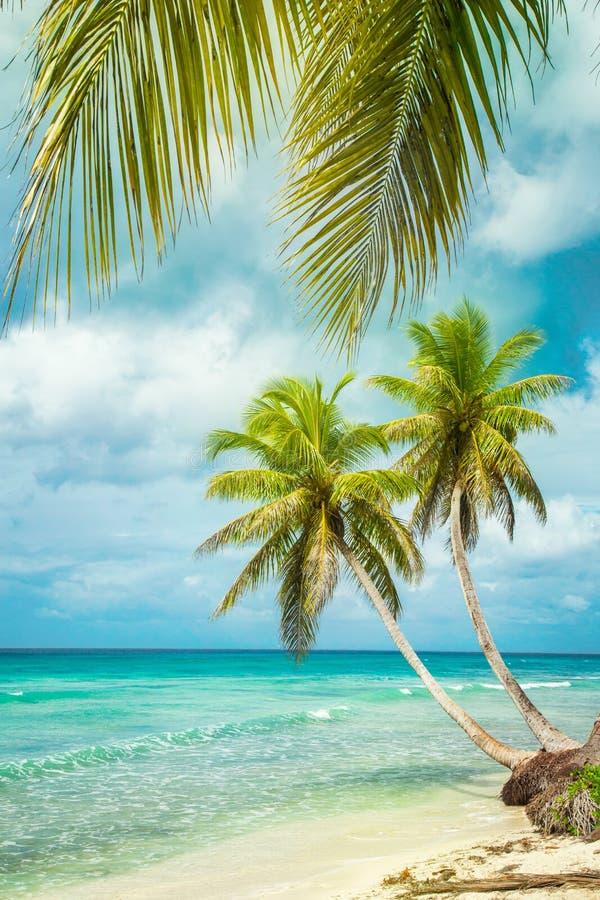 Praia tropical com palma de coco imagens de stock