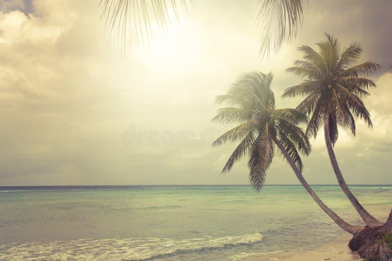 Praia tropical com palma de coco foto de stock royalty free