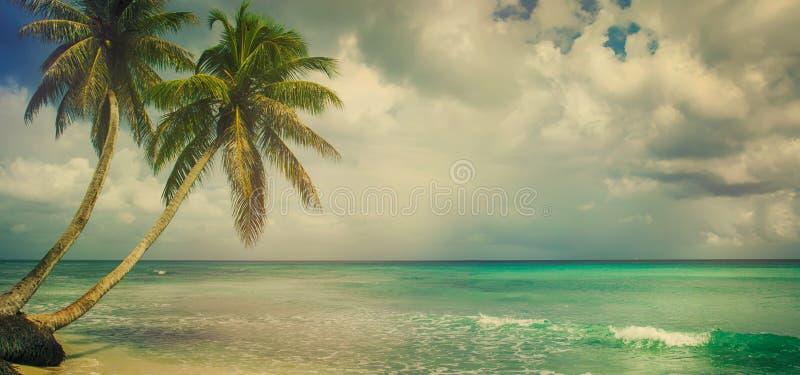 Praia tropical com palma de coco foto de stock