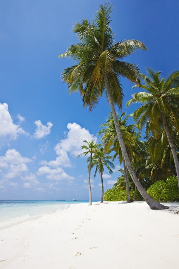 Praia tropical com palmeiras fotografia de stock