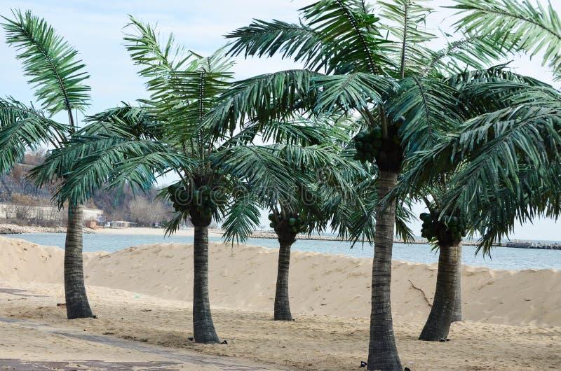Praia tropical com palmeiras fotografia de stock royalty free