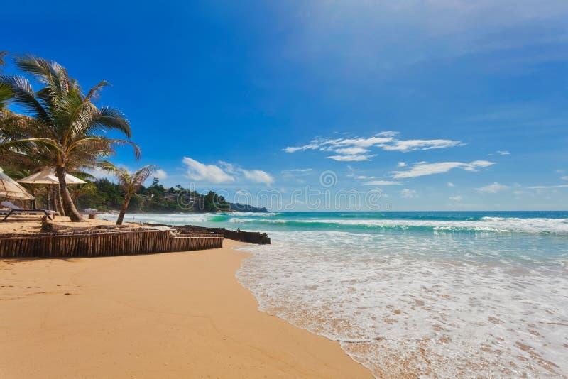 Praia tropical com palns fotografia de stock royalty free