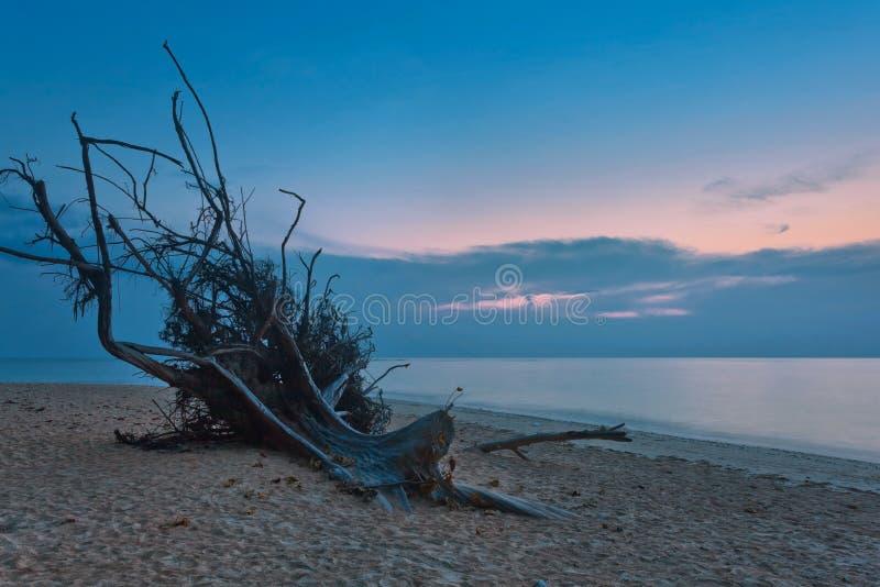 Praia tropical com senão de madeira velha no por do sol imagem de stock