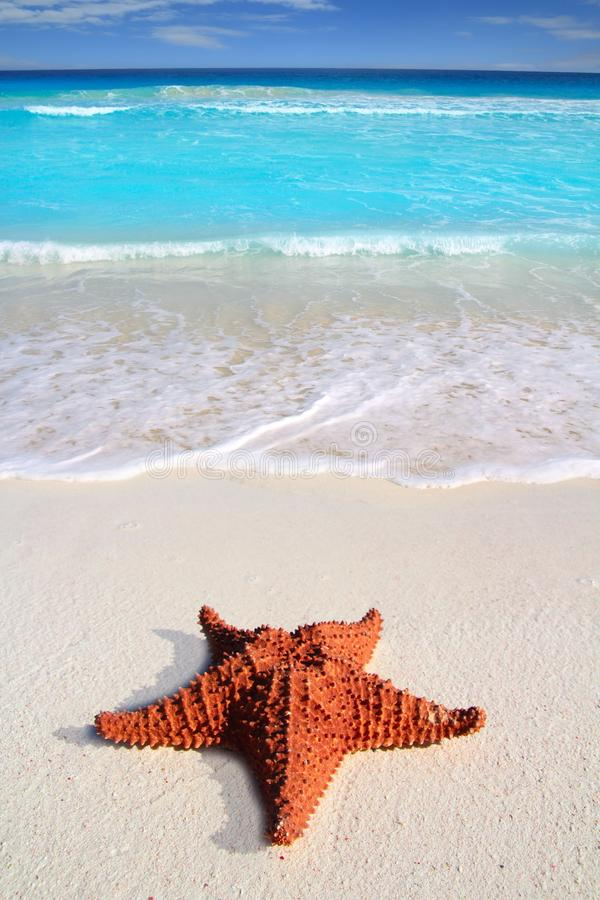 Praia tropical de turquesa da areia dos starfish do Cararibe imagem de stock