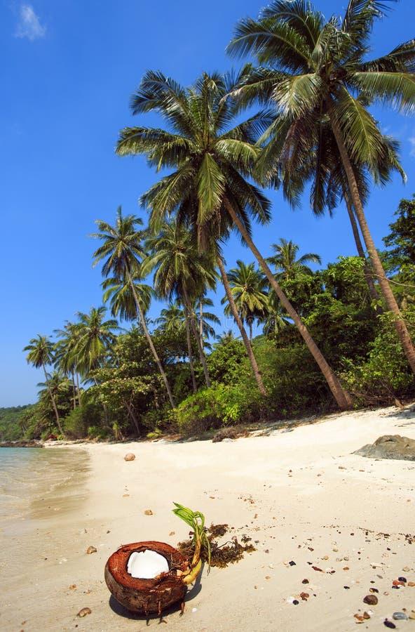 Praia tropical em Tailândia Koh Samui imagens de stock