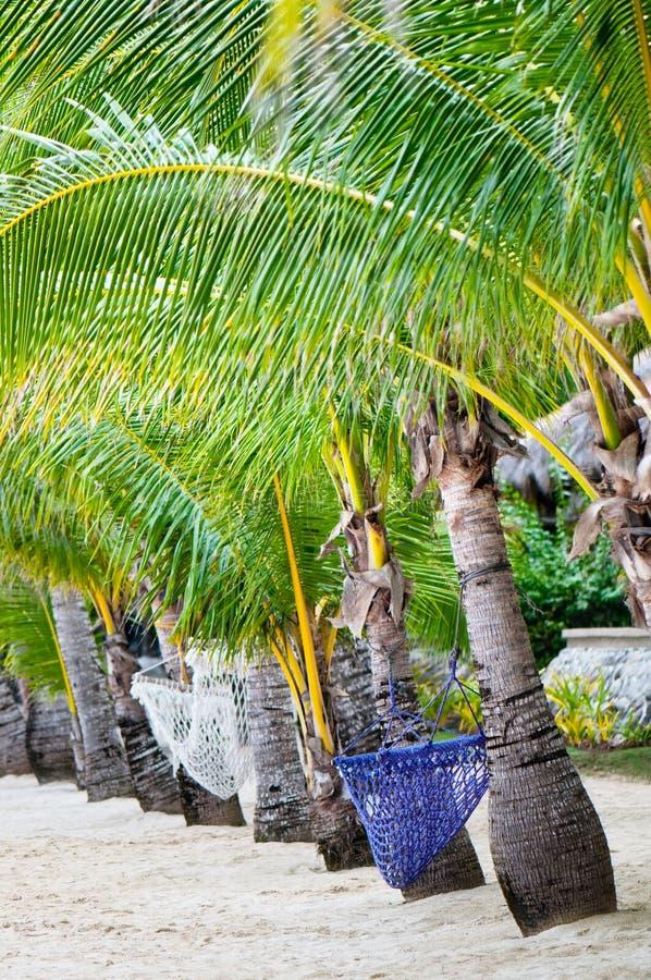 Praia tropical só fotos de stock royalty free