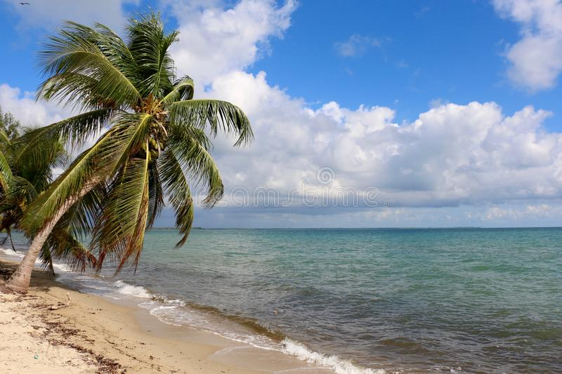 Praia tropical surpreendente fotos de stock royalty free