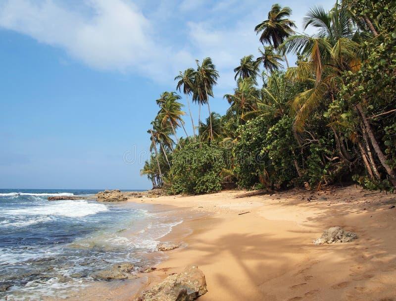 Praia Unspoiled com vegetação luxúria imagens de stock royalty free
