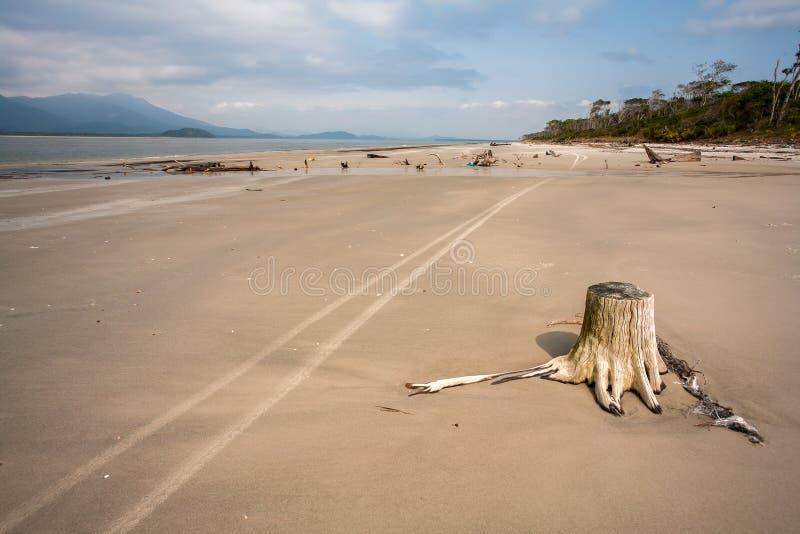 Praia vazia com os troncos nas marcas da areia e do weel em Brasil imagem de stock royalty free