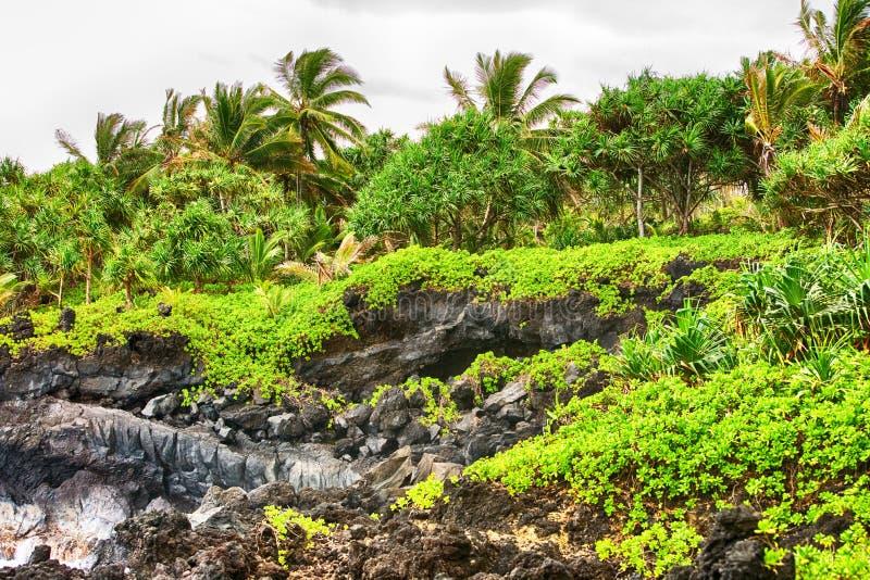 Praia verde tropical com penhascos e as palmeiras pretos fotos de stock