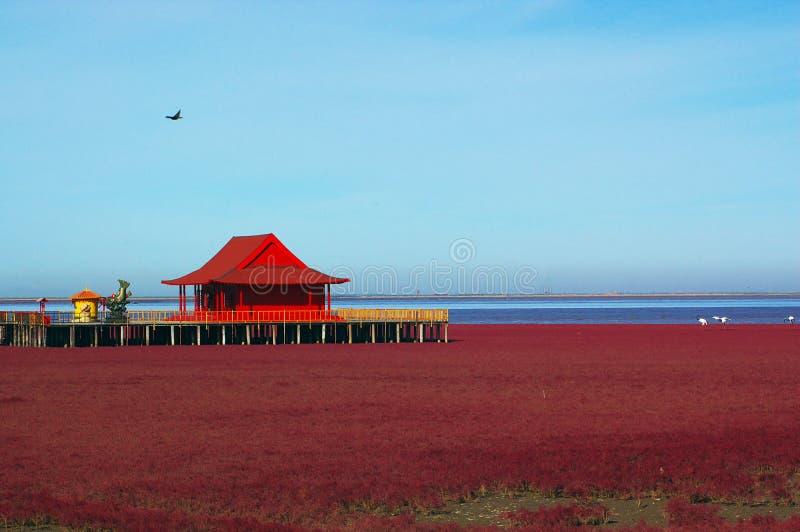 Praia vermelha fotografia de stock royalty free