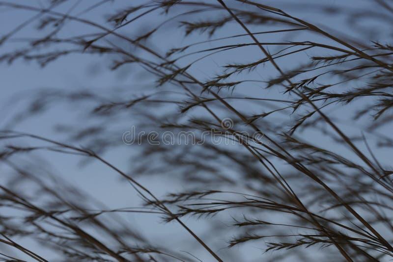 Praire 2 трав Стоковые Изображения
