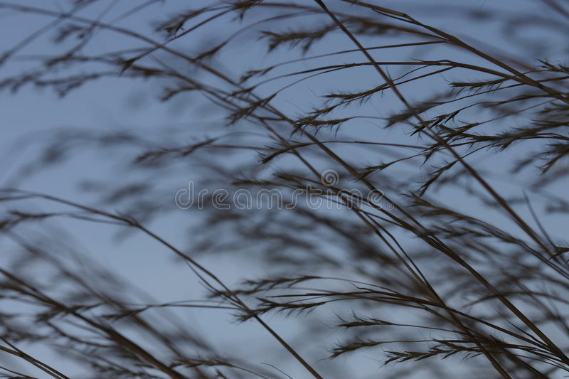 Download Praire grass 2 stock photo. Image of weed, wheat, seed, winter - 54004
