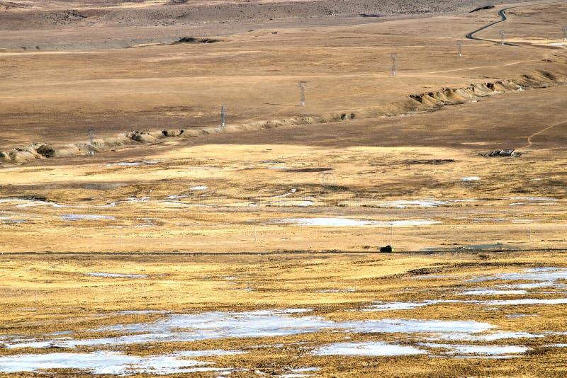 prairie photographie stock libre de droits