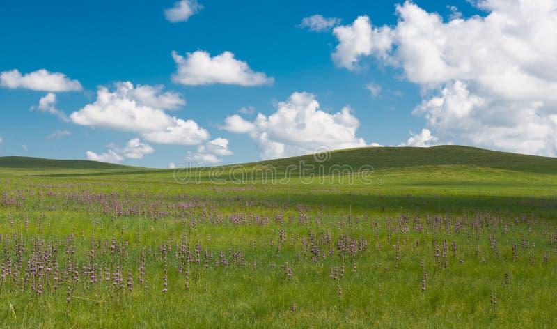 prairie photos libres de droits