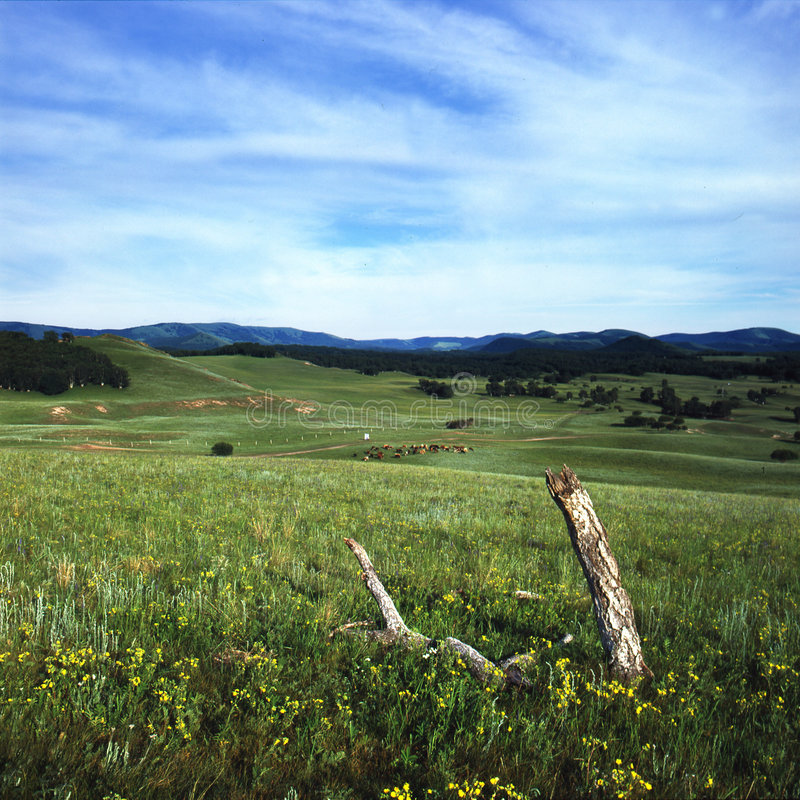 Prairie images libres de droits