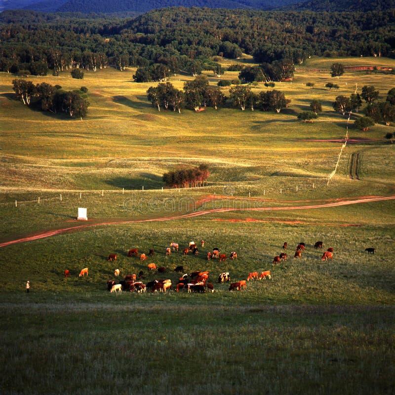 Prairie photo stock
