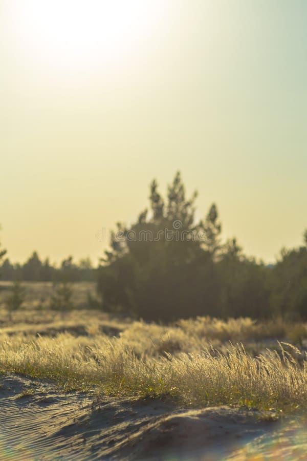 Prairie au coucher du soleil, le soleil pâle au-dessus de la prairie tranquille photo libre de droits