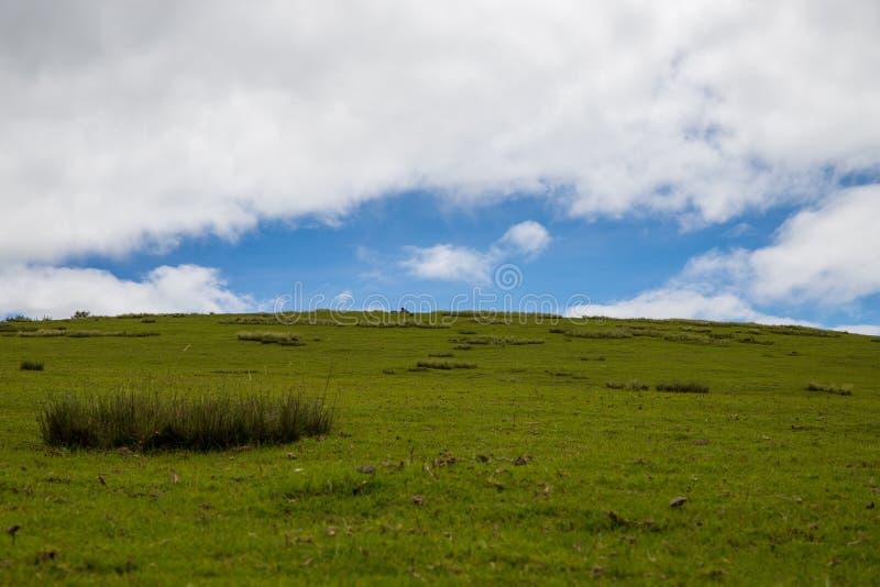 Prairie avec un ciel nuageux image libre de droits