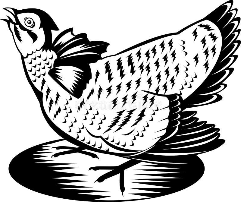 Prairie Chicken vector illustration