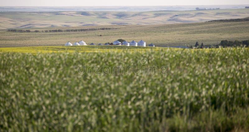 Prairie de champ de Saskatchewan photos stock
