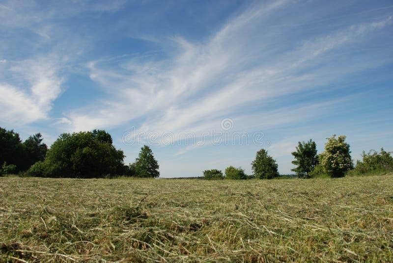 Prairie de fauche avec des arbres photographie stock libre de droits