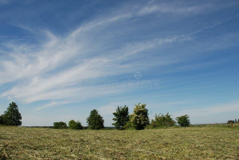 Prairie de fauche avec des arbres photographie stock