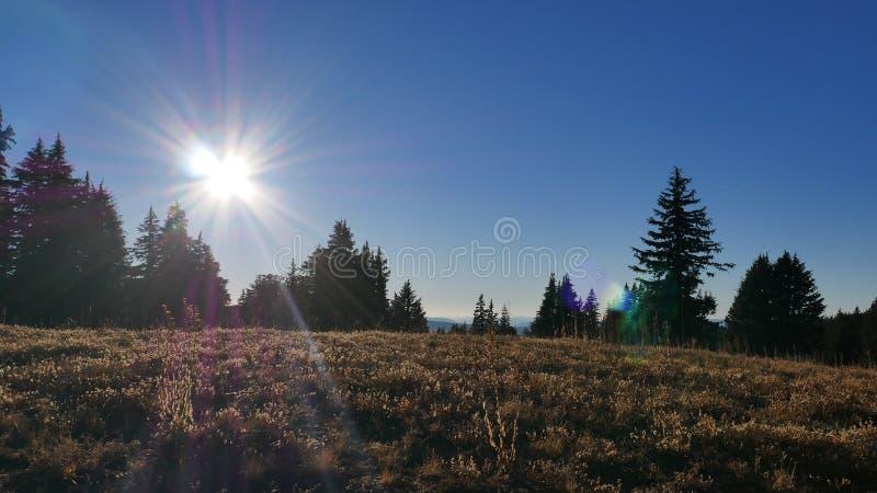 Prairie de soleil photographie stock