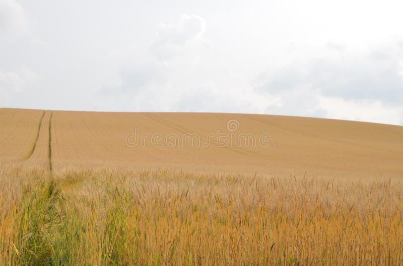 Prairie du Japon photos stock