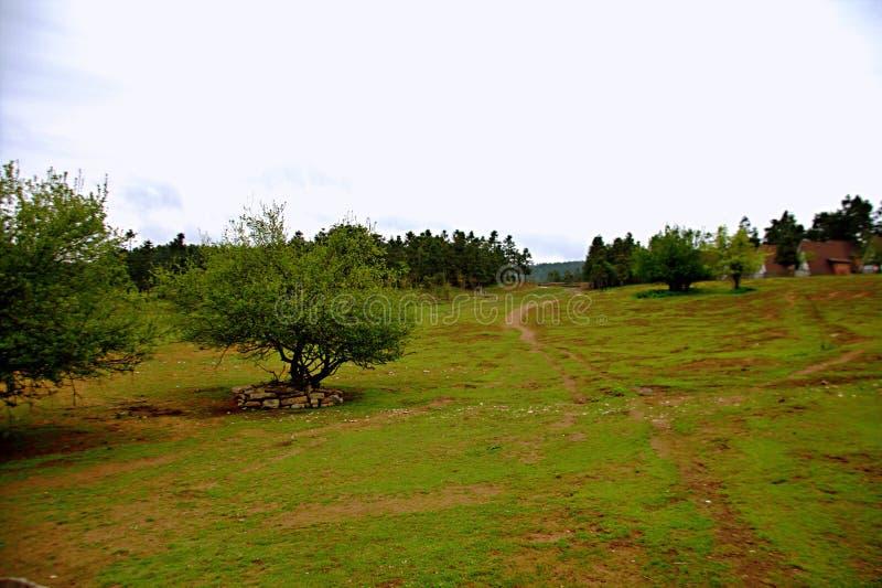 Prairie féerique de montagne de Wulong image stock