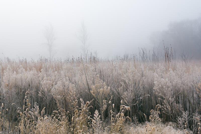 Prairie grande givrée d'herbe en brouillard photographie stock libre de droits